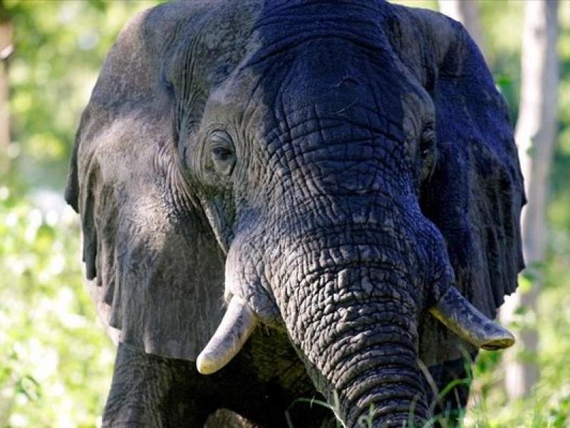 ελεφαντας.jpg