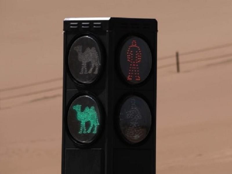 φανάρι για καμήλες