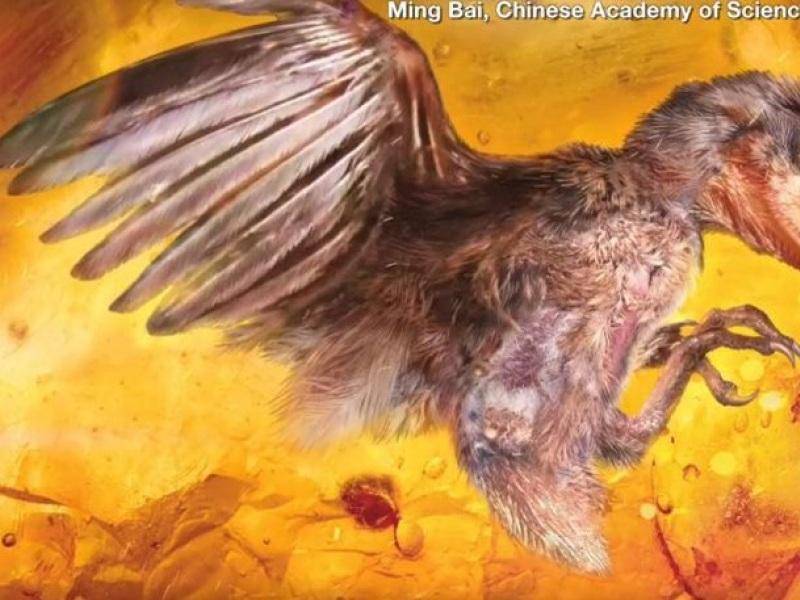 πτηνό