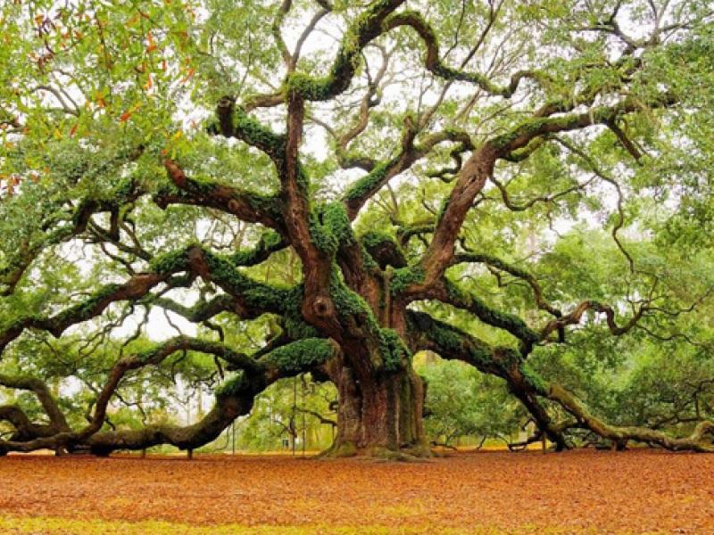 δέντρο εξωτερικού