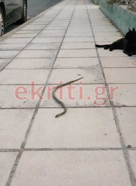 Στο Πάρκο Μικράς Ασίας έκανε την εμφάνισή του το φίδι