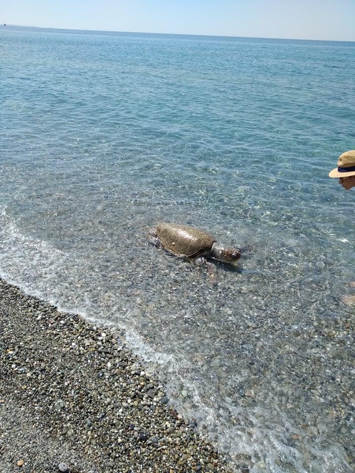 Το άτυχο ερπετό ξεβράστηκε στην παραλία