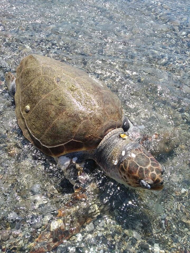 Θλίψη για την θαλάσσια χελώνα
