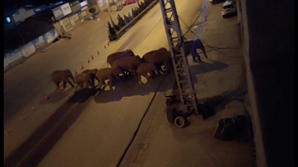 Το κοπάδι απαθανατίστηκε στους δρόμους του Εσουάν στην επαρχία Γιουνάν (Reuters)