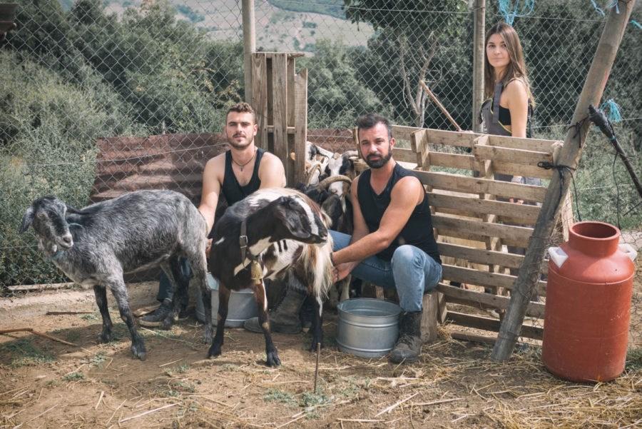 Φωτογραφίζονται, ταΐζοντας τα ζώα στην ύπαιθρο
