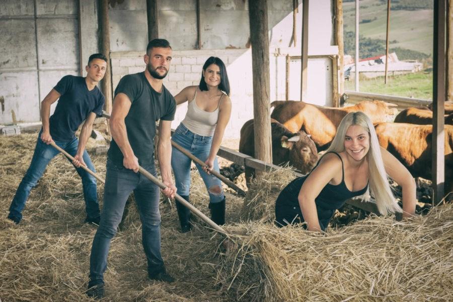 Εμφανίζονται ταΐζοντας τα ζώα στο στάβλο