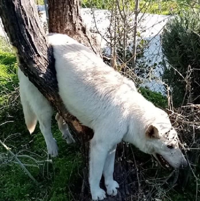 Το άτυχο ζώο παγιδεύτηκε στο δέντρο