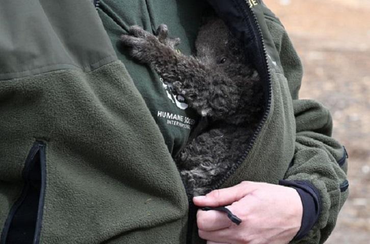 Το πληγωμένο κοάλα στην αγκαλιά της διασώστριας