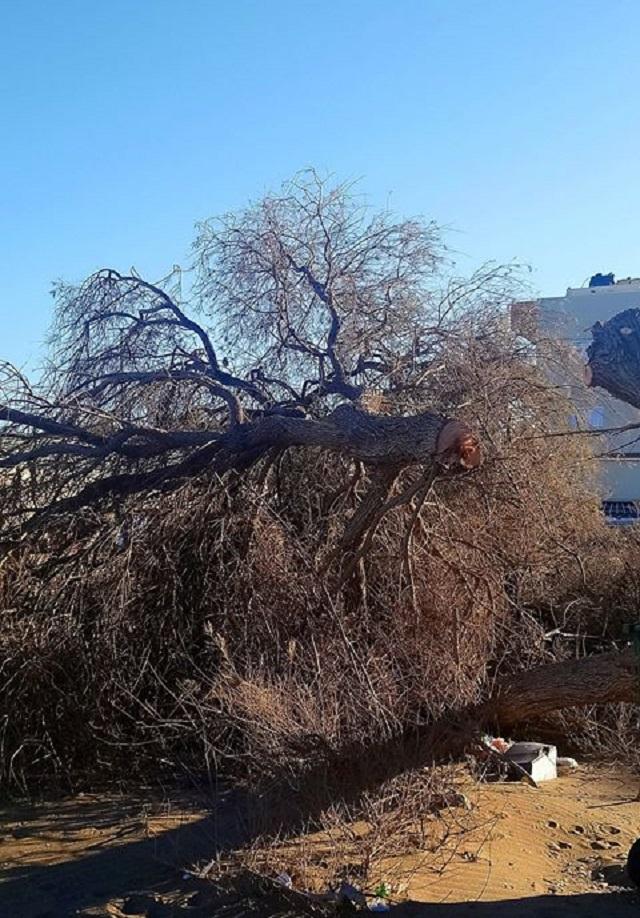 Δέντρα κόπηκαν στα δύο