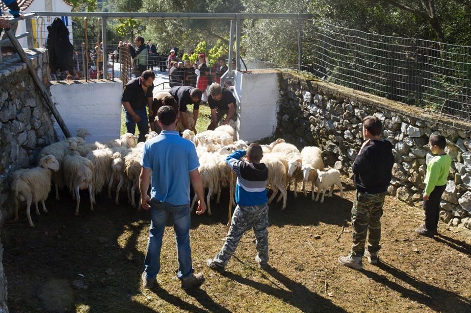 Tο παλιό έθιμο με τα πρόβατα στην Ασή Γωνιά