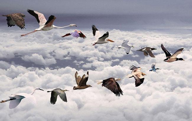 μεταναστευτικά πουλιά