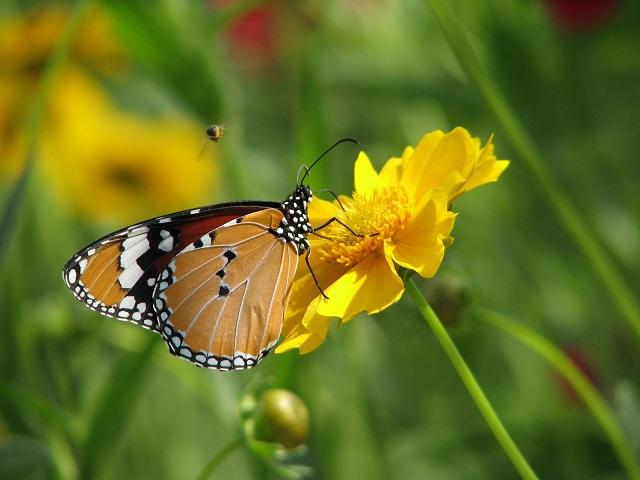 πεταλούδα-άνοιξη