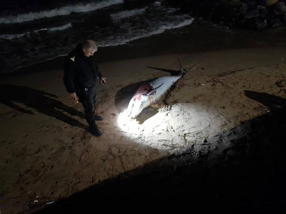 Λιμενικός εξετάζει το δελφίνι