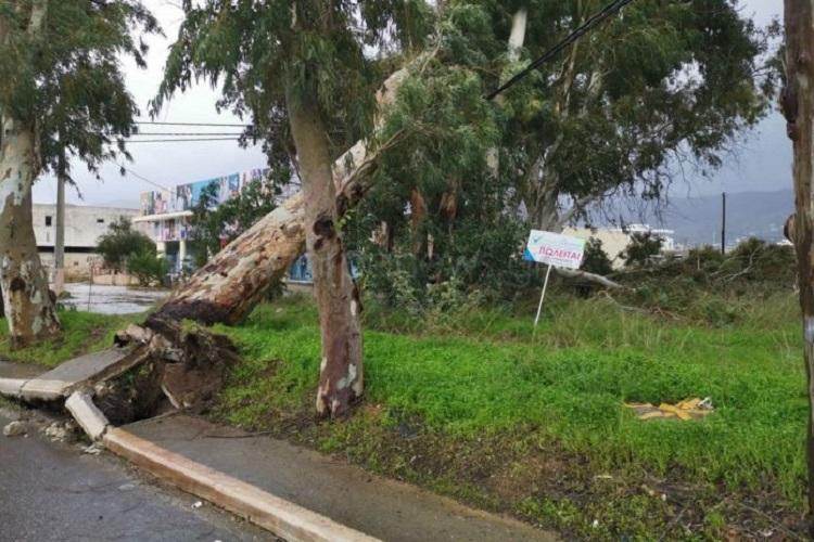 Οι άνεμοι ξερίζωσαν δέντρο στη λεωφόρο Σούδας