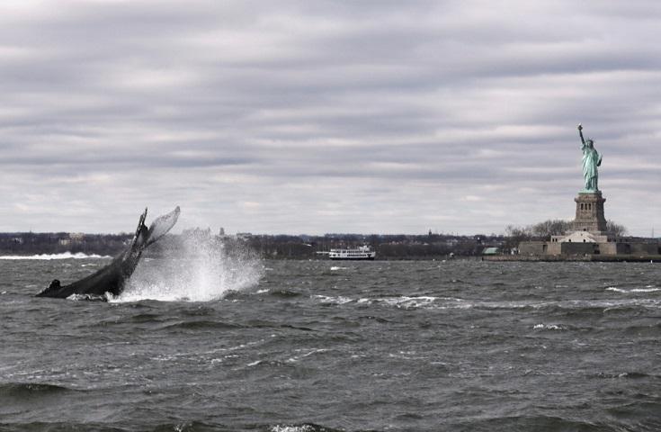 φάλαινα στο ποταμό Ηudson στο Μανχάταν