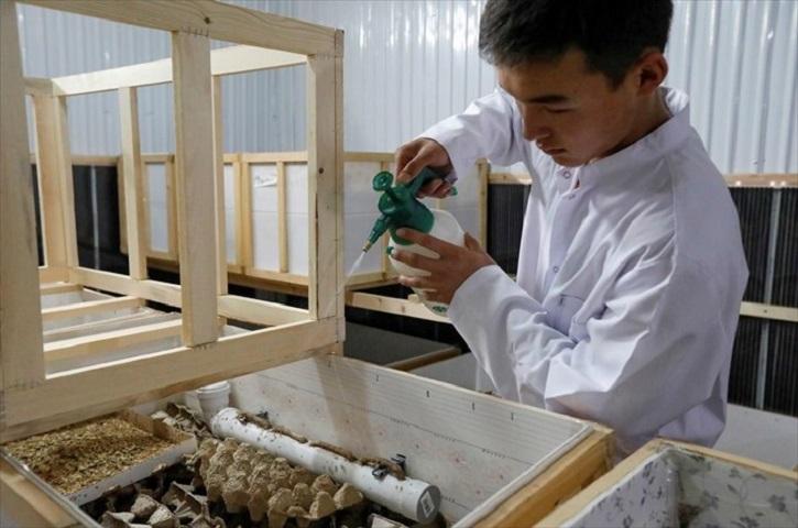 Γκαπάροφ έχει περίπου έναν τόνο ζωντανών γρύλων στο αγρόκτημά του