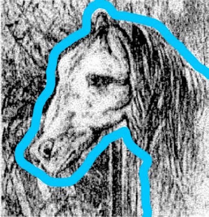 Το κεφάλι του αλόγου