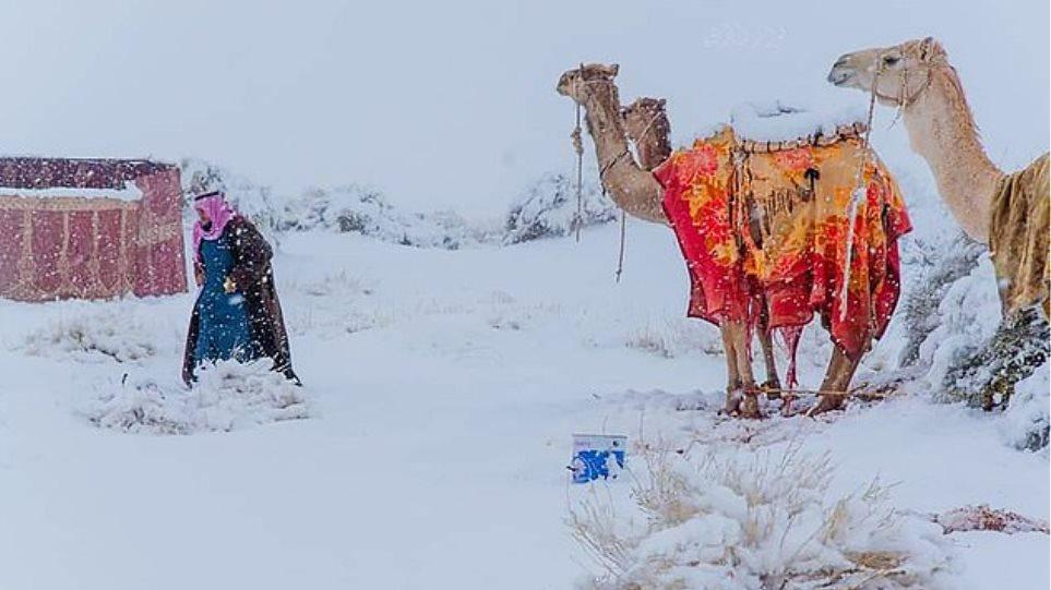 Καμήλες κόβουν... βόλτες στο χιόνι