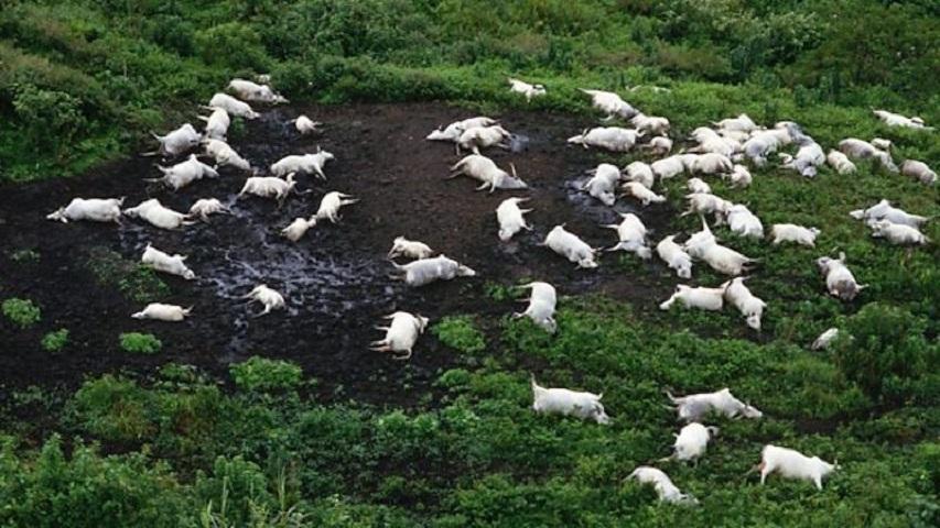 Σε ακτίνα 25 χιλιομέτρων, ο θάνατος συνάντησε τους ντόπιους και τα άγρια ζώα