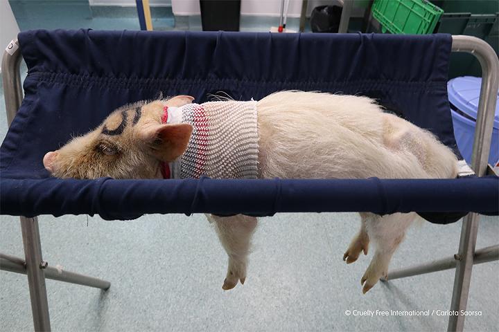 Εργαστήριο στην Ισπανία κακοποιούσε ζώα