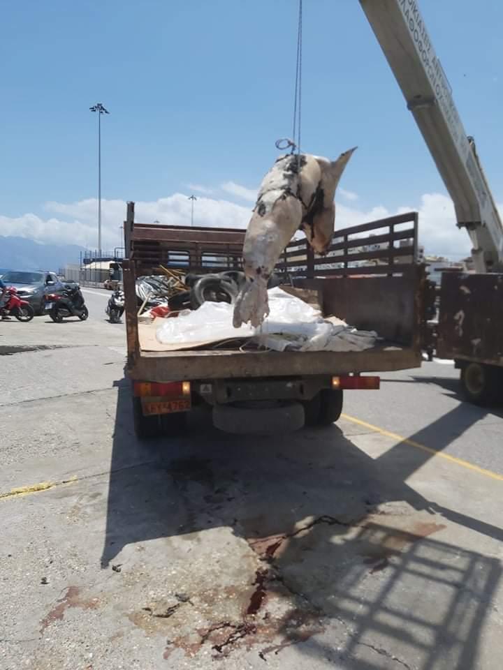 Οι υπηρεσιές του Δήμου Αγίου Νικολάου απομάκρυναν το νεκρό ζώο.