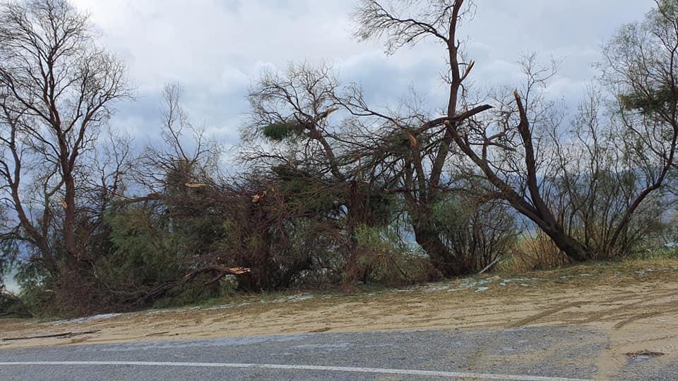 Δέντρα έπεσαν από τους ισχυρούς ανέμους