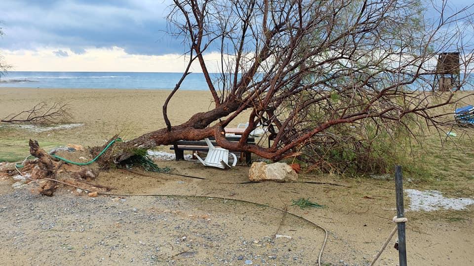 Το δέντρο δεν άντεξε στην παραλία