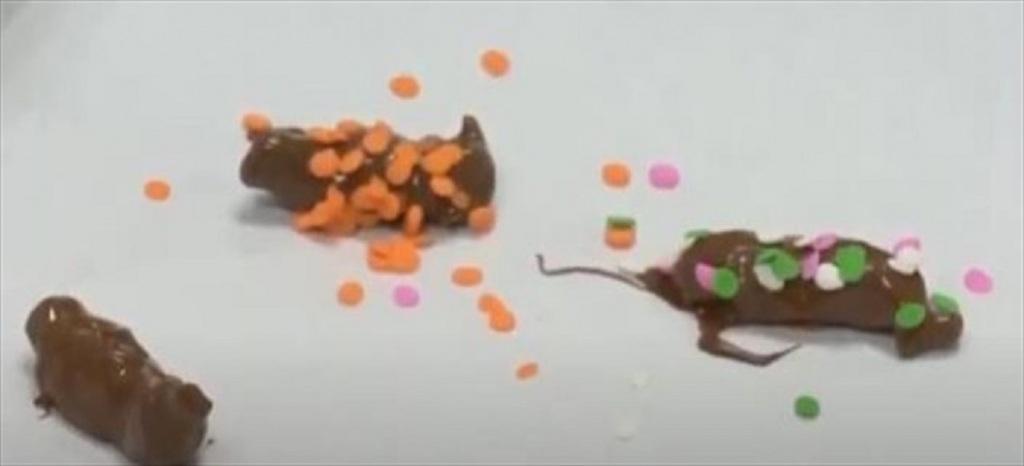 Πολύχρωμη τρούφα πάνω στα σοκολατοτζιτζίκια
