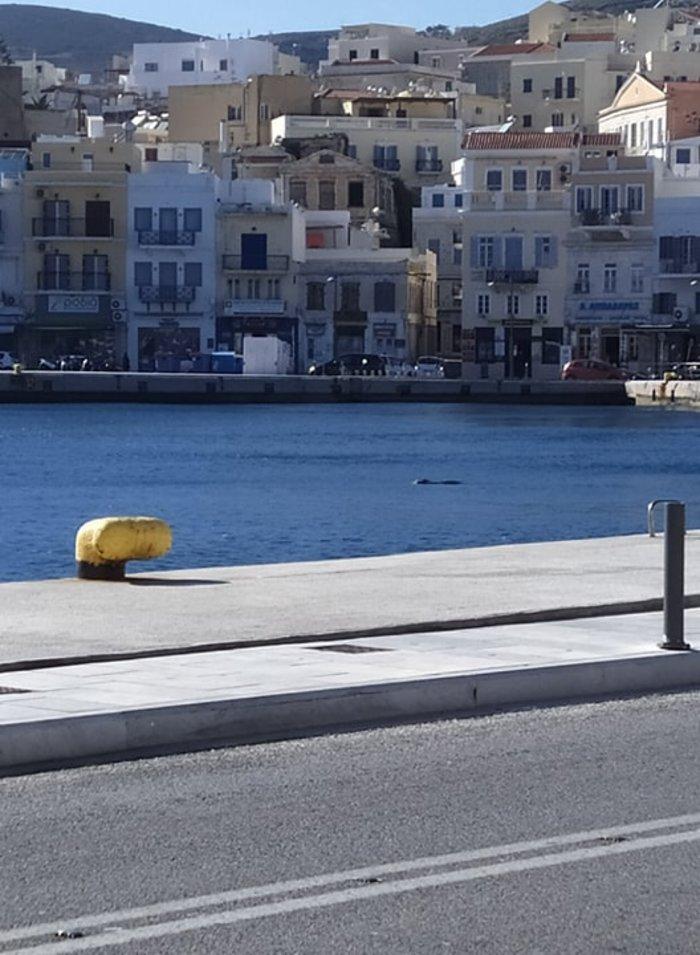 Φωκια στο λιμάνι της Σύρου